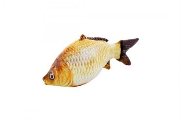黃鯉魚 貓草魚 40cm