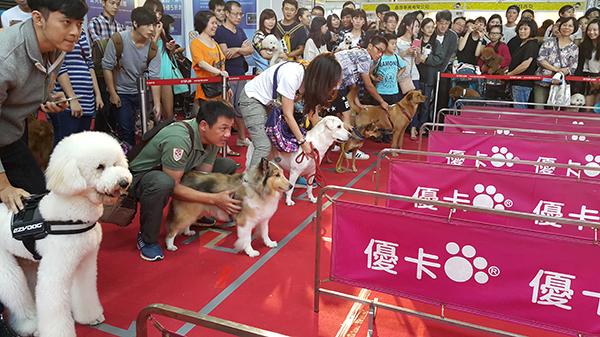 狗狗10米短跑趣味賽