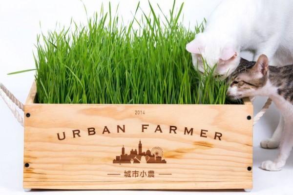 城市小農栽培組-寵物專區